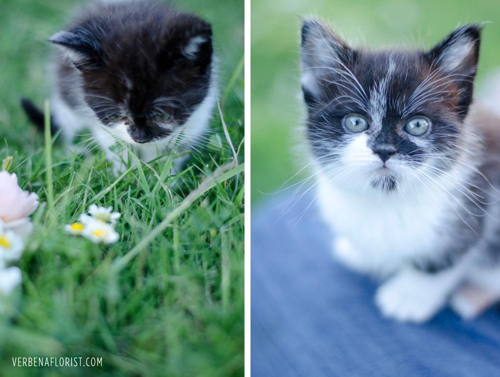 dust bunny farm cat verbena living florist flower farm kitten
