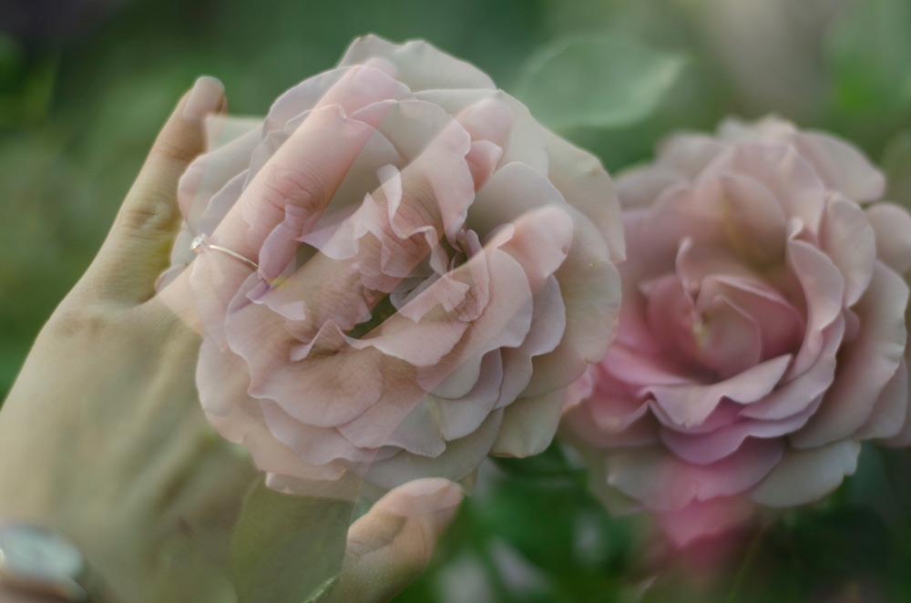 double exposure, verbena flower farm, farmer florist, slow flowers, flowers, dsfloral