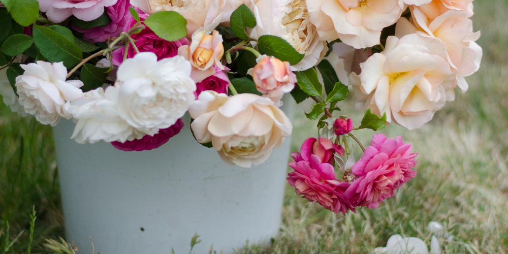 old fashion english garden roses farmer florist