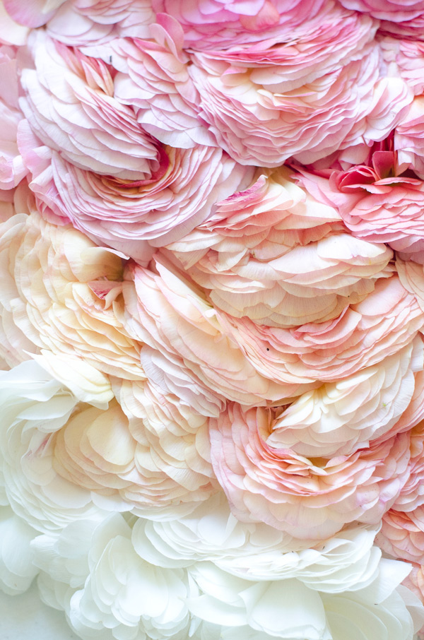 verbena ruffles flower art installation ombre