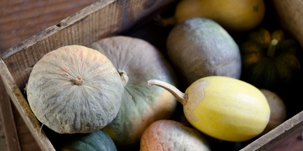 winter squash harvest in old wooden crate at verbena farms